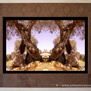 Photographic Art and Design of Olive Wood 2