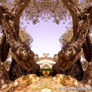 "Photographic Art ""Olive trees of Salento"" 2"
