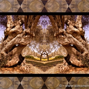 Photographic Art and Design of Olive Wood 3
