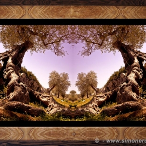 Photographic Art and Design of Olive Wood 4