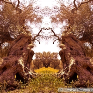 "Photographic Art ""Olive trees of Salento"" 4"