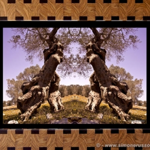 Photographic Art and Design of Olive Wood 5