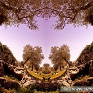 "Photographic Art ""Olive trees of Salento"" 5"