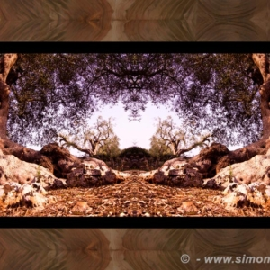Photographic Art and Design of Olive Wood 6