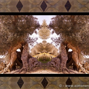 Photographic Art and Design of Olive Wood 7