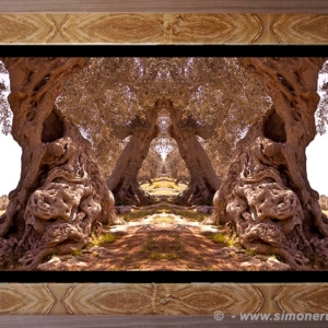 Photographic Art and Design of Olive Wood 8