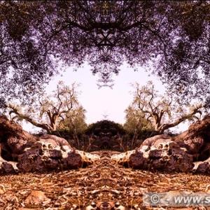 "Photographic Art ""Olive trees of Salento"" 8"